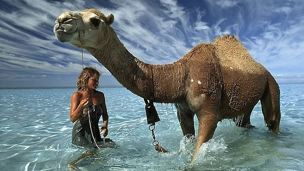 Tracks-Mia & camel in ocean