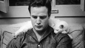 Brando & cat