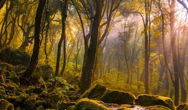 Tale of Tales-woods